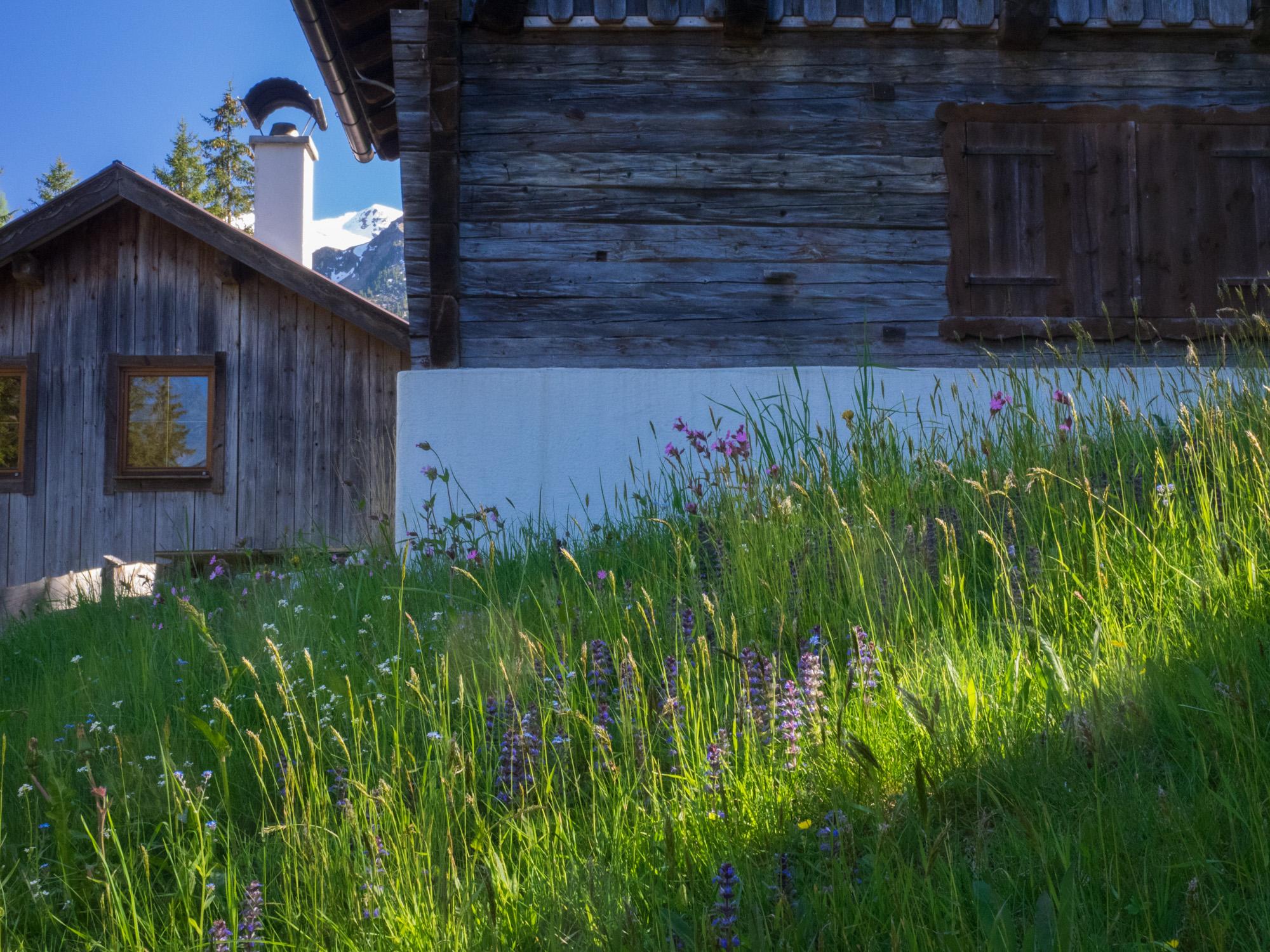 Blumenwiese bei der Edenhaus-Aste im Voldertal