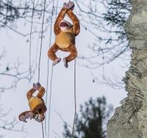 Affen turnen am alten Volderwildbadweg herum