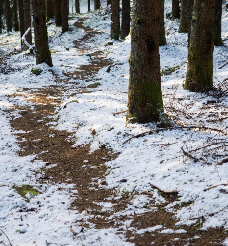 Steig im Wald bei Volderwildbad