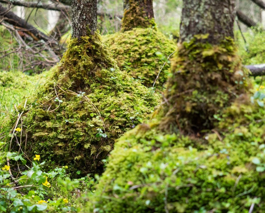 Moose umhüllen den Fuß der Baumstämme