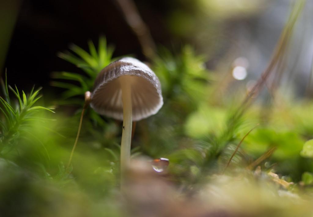 Kleiner Pilz und Moose in einem Wald