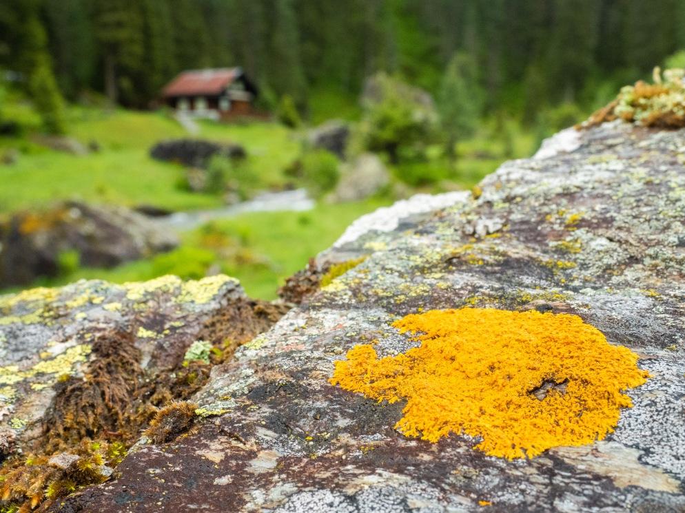 Flechte auf Felsen bei Schwarzbrunn